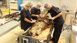 Les restes deLouise de Quengo sur la table d'autopsie au Chu de Toulouse (Haute-Garonne), mars 2015 (DRAC BRETAGNE / FRANCE 3 BRETAGNE )