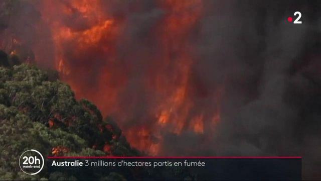 Australie : 3 millions d'hectares de forêt partis en fumée