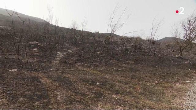Pays basque : les incendies sont sous contrôle