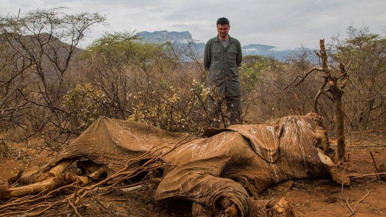 Une carcasse d'éléphant victime des braconniers à Samburu, au Kenya, le 16 août 2012. (SIMON MAINA / AFP)