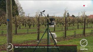 Le gel risque de détruire les récoltes (France 2)