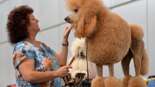 Aout 2013, un chien préparé pour une compétition. (HENDRIK SCHMIDT / DPA)