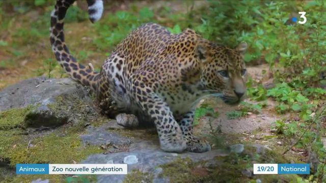 Animaux : le Bioparc de Doué-la-Fontaine, un zoo nouvelle génération