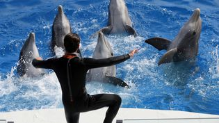 Des dauphins dans un bassin du Marineland d'Antibes (Alpes-Maritimes), le 17 mars 2016. (VALERY HACHE / AFP)