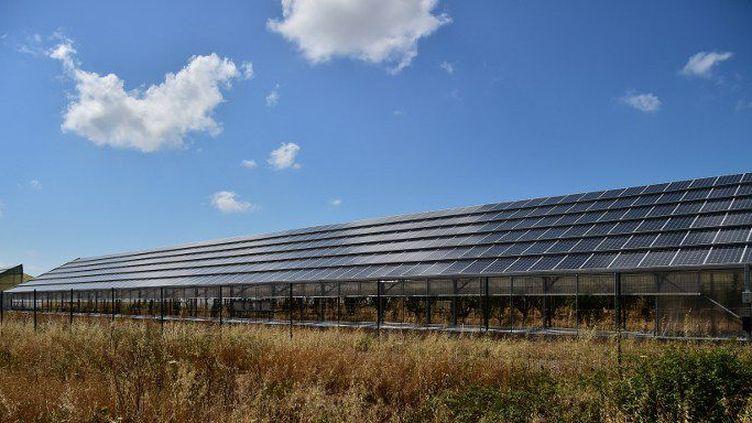 Une usine de panneaux solaires à Narbolia, en Sardaigne, le 15 juin 2015. (GIUSEPPE CACACE / AFP)