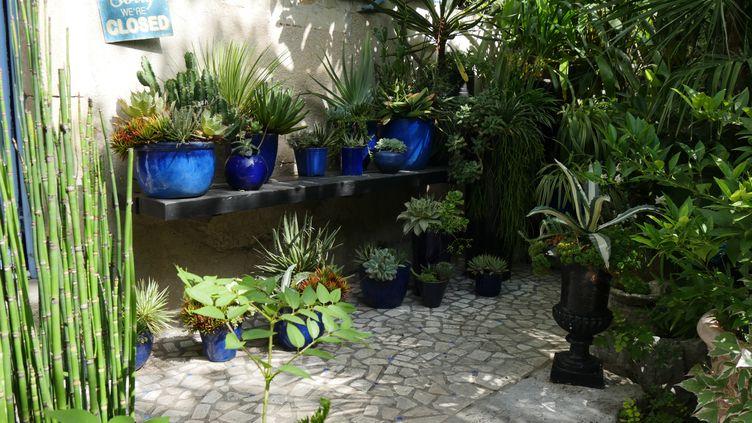Plantes en pot dans le jardin d'Anthony Bazin (Jardin de Bésignoles, dans l'Ardèche). (ISABELLE MORAND / RADIO FRANCE / FRANCE INFO)