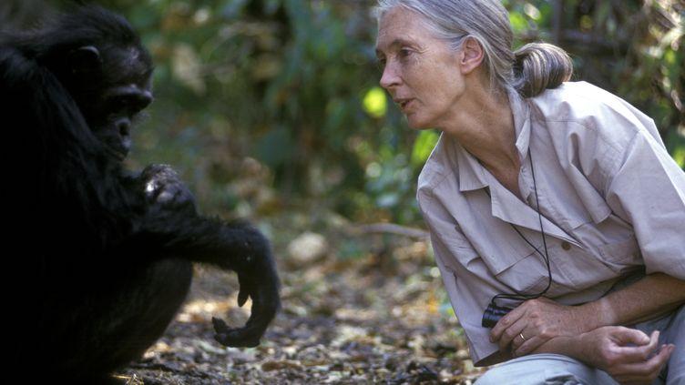 La primatologue Jane Goodall, avec un chimpanzé, dans le parc de Gombe, en Tanzanie, le 15 février 2005. (MICHEL GUNTHER / BIOSPHOTO / AFP)