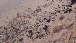 Corse : des boulettes d'hydrocarbures échouées sur la plage de Solenzara (FRANCE 2)