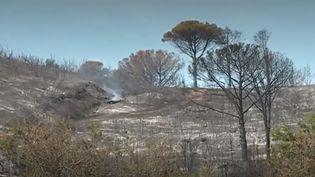 Un violent incendie est survenu dans le Gard hier, mardi 30 juillet. Où en est-on ce mercredi ? On fait le point. (FRANCE 3)