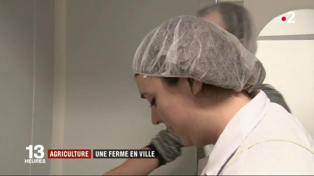 Feuilleton : le champ des agricultrices (4/5)