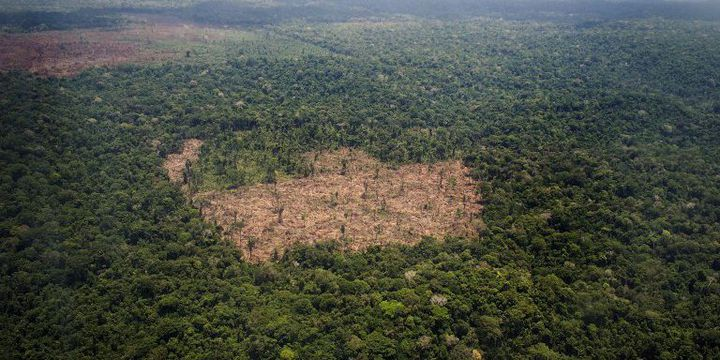 Zone soupçonnée d'être l'objet d'une déforestation illégale par Greenpeace qui a mené une enquête au Brésil. Etat de Para, le 14 octobre 2014.  (RAPHAEL ALVES / AFP)