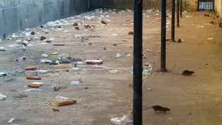 Des rats grouillent dans une cour de promenade de la prison de Fresnes (JC HANCHE / CGLPL / FRANCEINFO)