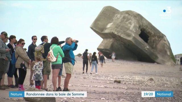 Nature : randonnée dans la baie de Somme