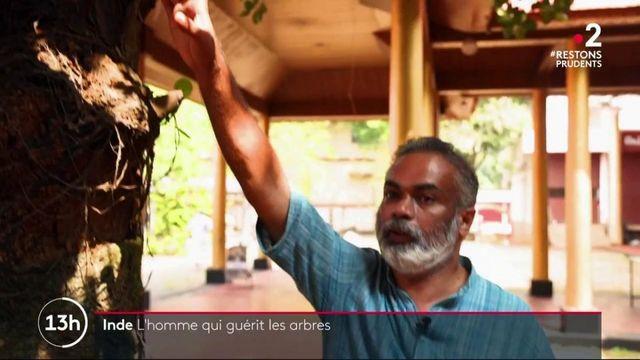 """Inde : à la rencontre du """"médecin des arbres"""""""