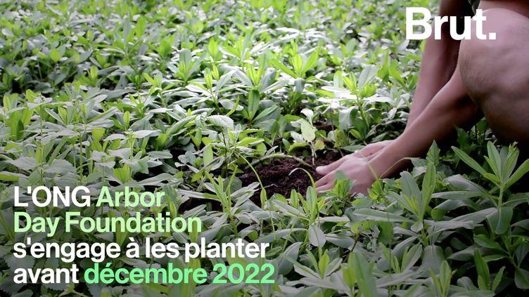 VIDEO. Ils veulent récolter 20 millions de dollars pour planter 20 millions d'arbres (BRUT)