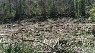Environnement : un pillage de plusieurs centaines de chênes en Ariège (France 3)