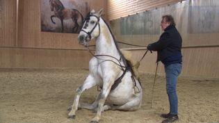 Le cascadeur équestre italien Mario Luraschi célèbre ses cinquante ans de carrière. À cette occasion, il a ouvert les portes de son domaine. (France 3)