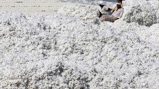 Des travailleurs tassent avec leurs pieds le coton fraîchement déchargé d'un camion à Gujarat (Inde), le 9 février 2015. (AMIT DAVE / REUTERS)