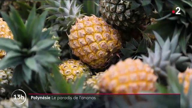 Polynésie : Moorea, l'île aux ananas