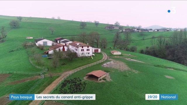 Pays basque : ces canards qui résistent à la grippe aviaire