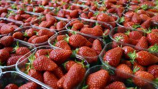 Seuls sept Français sur dix se disent satisfaits du goût des fraises et des abricots, selon une enquête de la CLCV. (GEORGES GOBET / AFP)