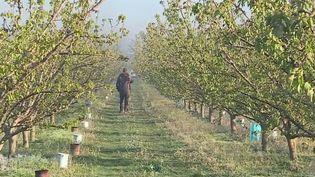 Agriculture : le gouvernement active le régime de calamité agricole suite aux épisodes de gel (France 3)
