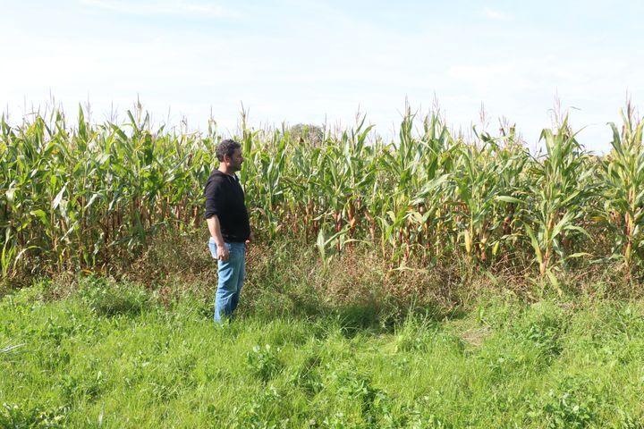 Alain Davydevant l'un de ses champs de maïs, le 27 septembre 2017 à Pointel (Orne). (VALENTINE PASQUESOONE / FRANCEINFO)