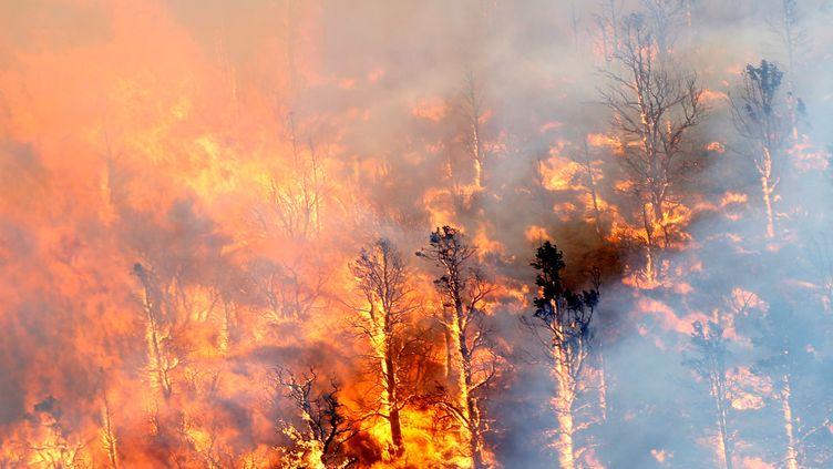 (Le Blue Cut Fire a ravagé plus de 12 500 hectares de forêt en moins de trois jours © Reuters / Mario Anzuoni)