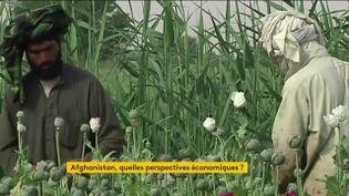 La culture du pavot est une ressource cruciale pour les talibans (FRANCEINFO)