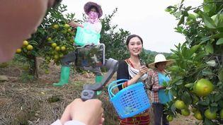 Le phénomène des influenceurs ne se limite pas à l'univers de la mode et de la beauté. En Chine, les produits vantés sont plutôt des fruits et des légumes, et les stars sont des agriculteurs qui se mettent en scène en plein milieu de leurs champs. (CAPTURE ECRAN FRANCE 2)