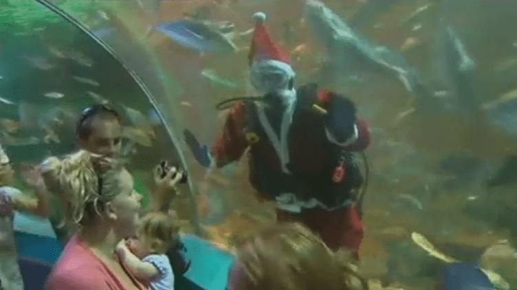 Un employé de l'aquarium de Sydney (Australie) déguisé en père Noël fait coucou au public avant de nourrir les poissons. (APTN)