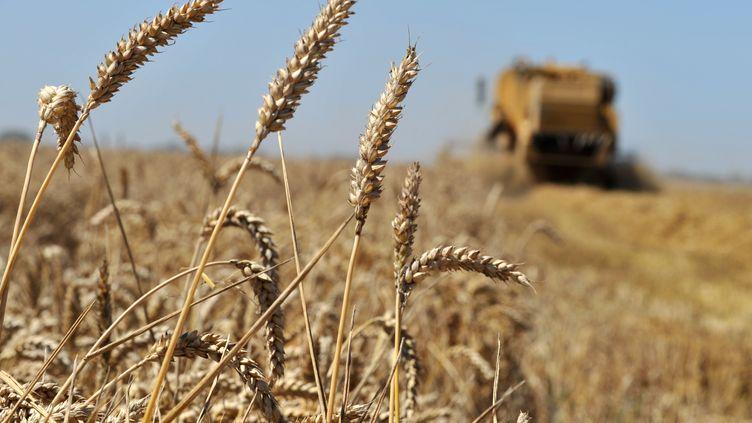 Les aides directes aux agriculteurs constituent l'essentiel des subventions agricoles européennes. Parfois mal utilisées, elles réservent quelques surprises. (MYCHELE DANIAU / AFP)