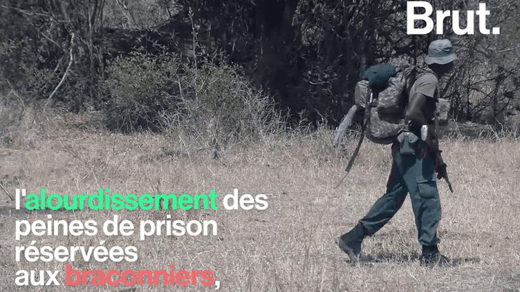 Malawi : renforcement dans la lutte contre le braconnage (Brut.)