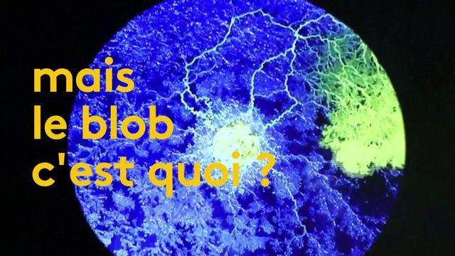 Le blob, un mystère de la nature