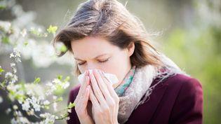 Les pollens de bouleau seront particulièrement présents dans le nord-est de la France, du 15 au 22 avril 2016. (GARO / PHANIE / AFP)