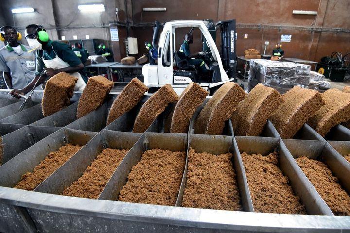L'usine de la Compagnie ivoirienne d'Hévéa réalise une première transformation du latex en granulés. Transformer le latex en produits finis est la solution pour éviter la fluctuation des cours. (SIA KAMBOU / AFP)
