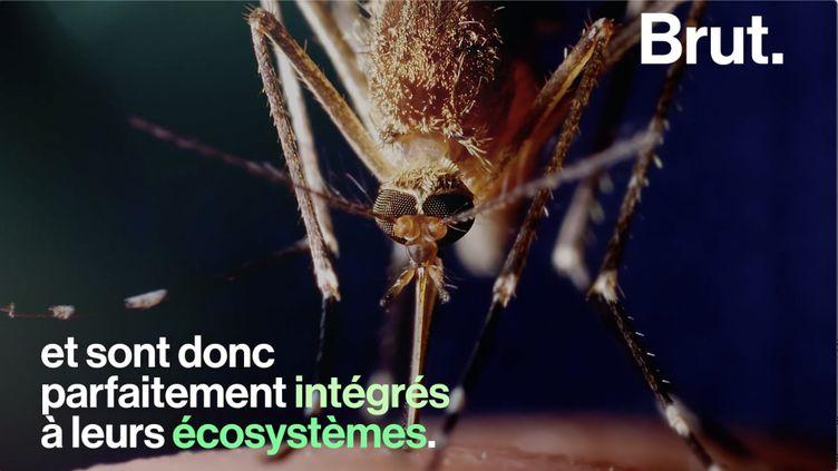 VIDEO. À quoi ressemblerait un monde sans moustiques ? (BRUT)