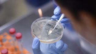 Travail de recherche en laboratoire pour le développement d'un vaccin contre le Covid-19 (illustration). (DOUGLAS MAGNO / AFP)