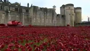 Des coquelicots en céramique sont achetés par des anonymes et plantés à côté de la Tour de Londres. (CAPTURE D'ÉCRAN FRANCE 2)