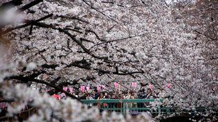Des personnes sous les cerisiers en fleurs à Tokyo (Japon), le 2 avril 2017. (TORU HANAI / REUTERS)