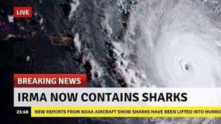 Un photomontage sur Irma affirmant que l'ouragan contient des requins. (RADIO FRANCE / CAPTURE D'ÉCRAN)