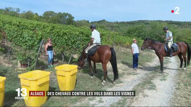 Alsace : des chevaux contre les vols dans les vignes