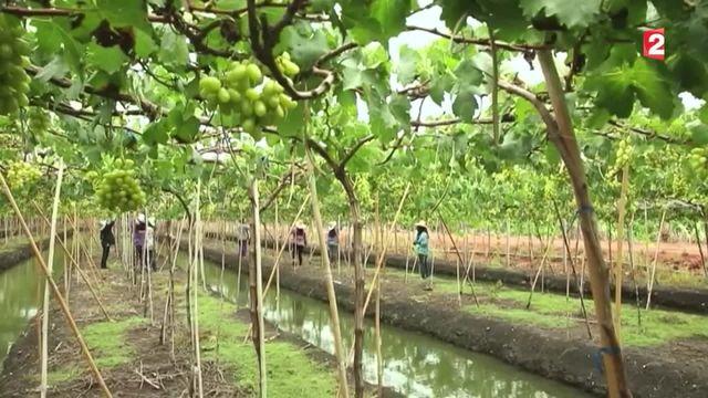 Feuilleton : tour du monde des vignobles (3/5)