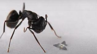 """Le drone inspiréd'une graine de fleur en forme d'étoile à trois branches : la tristellateia, comparé à une fourmi d'après une vidéo du magazine """"Nature"""". (CAPTURE D'ECRAN YOUTUBE)"""