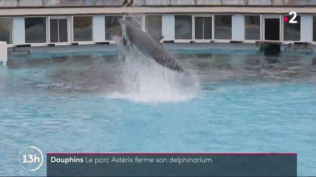 Parc Astérix : les visiteurs doivent dire adieu aux dauphins et aux otaries