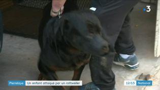 Un rottweiler a sauté sur un enfant de neuf ans à Pierrelaye (Val-d'Oise). La jeune victime est hospitalisée depuis le 8 juillet à l'hôpital Necker à Paris. (FRANCE 3)