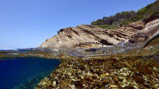 Les petits fonds rocheux de la mer Méditerranée abritent la plus grande concentration de vie en mer. (FLORIAN LAUNETTE / MAXPPP)