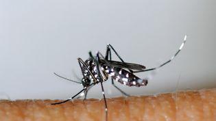 Un moustique tigre sur de la peau. (- / EID MEDITERRANEE)