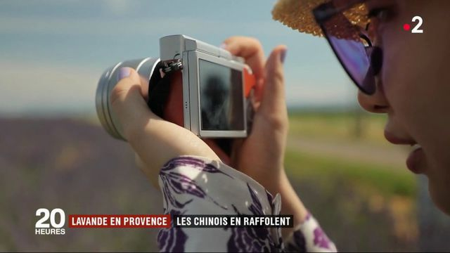 Provence : les Chinois raffolent des lavandiers