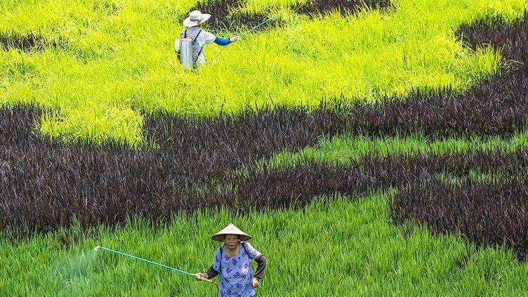 (Tang Dehong / XINHUA / AFP)